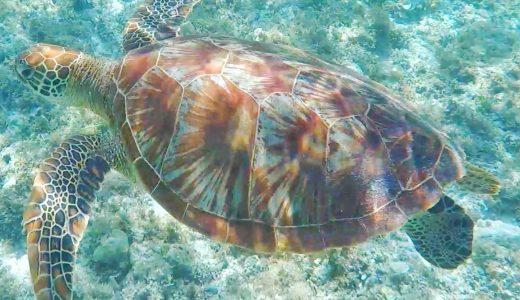 【セブたび】セスナ機(AIR JUAN)で行く、ボホール島2泊3日ツアー(2)~バリカサグ島でウミガメと泳ぐ・バージンアイランド~